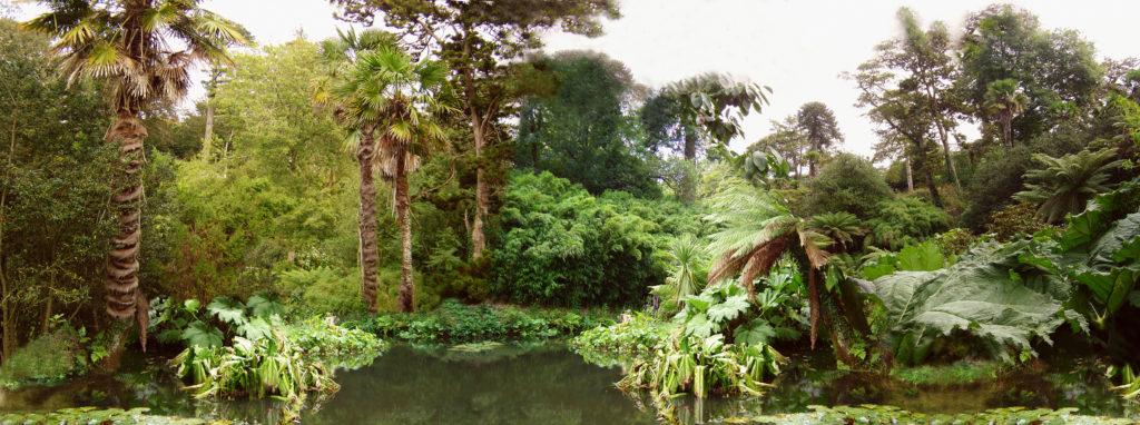 jungle-1387546